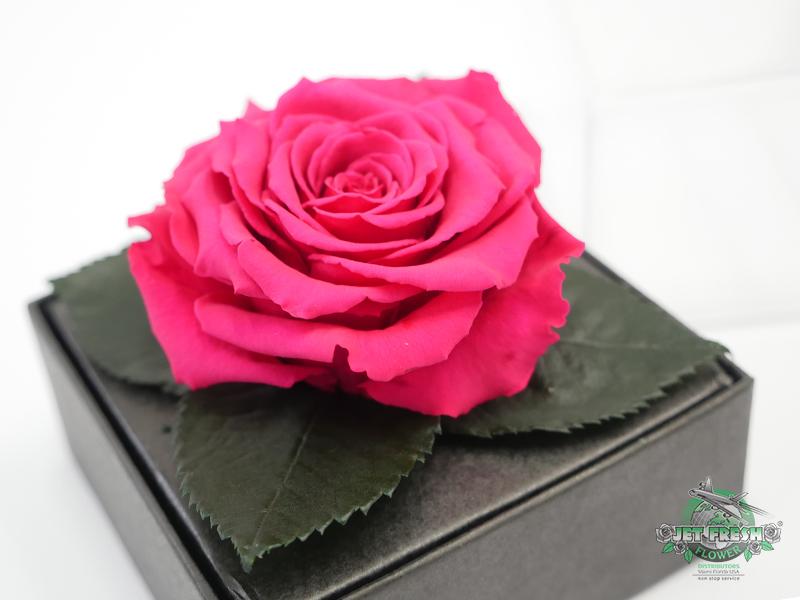 Preserved Roses at Jet Fresh Flowers