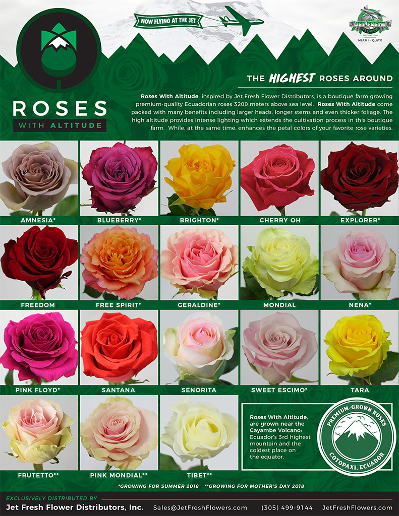 Roses with Altitude Poster