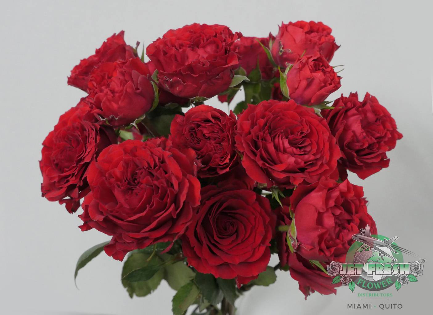 Roses In Garden: JF_SprayRoses_Red_BellalindaBrick_ContinentalBreeding_A