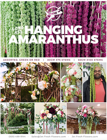 Hanging amaranthus