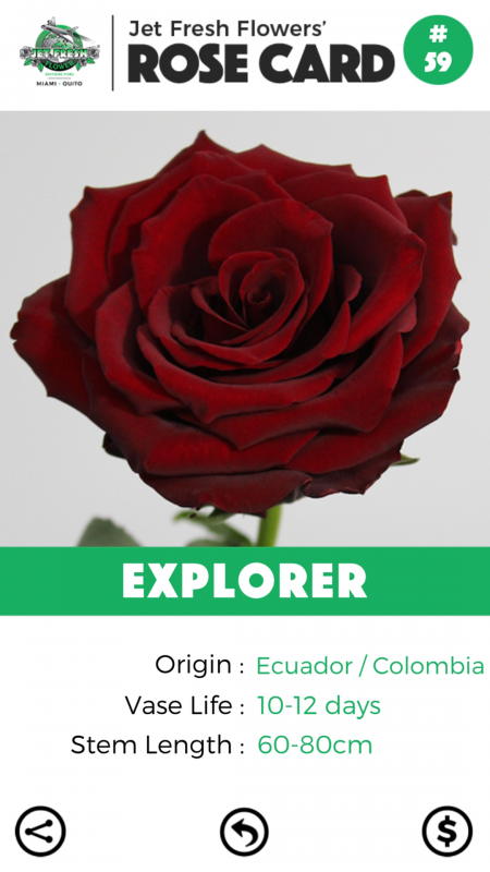 Explorer rose card