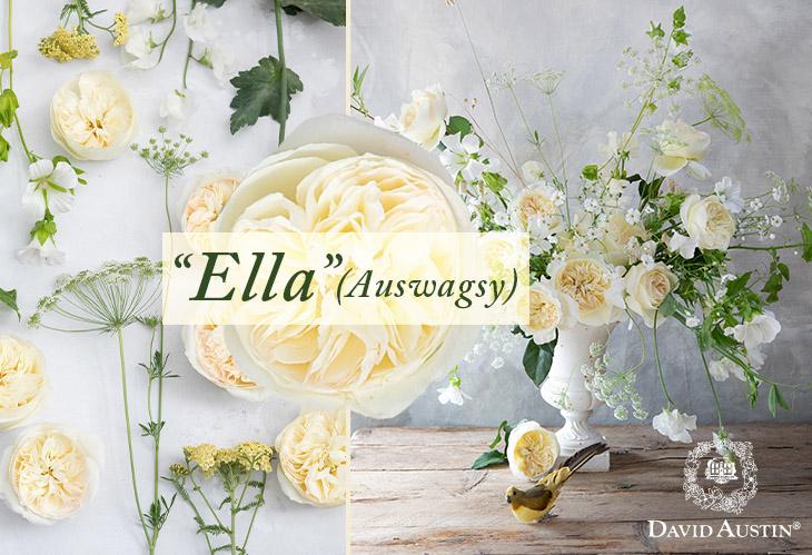 Ella Auswagsy Garden Roses By David Austin Wedding Roses Jet