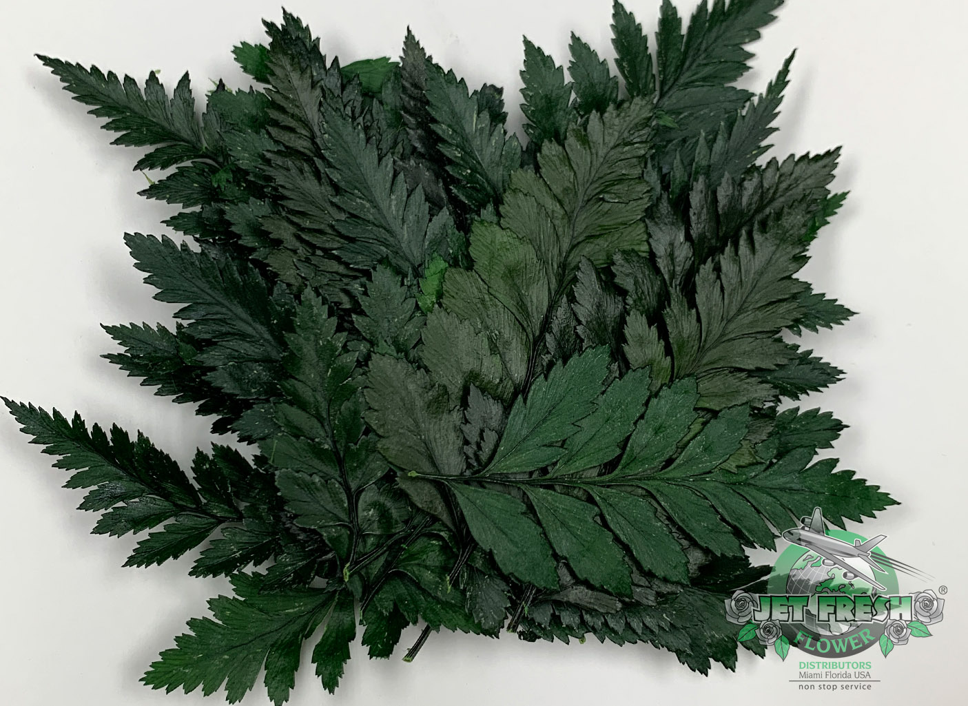 Preserved Small Leather Leaf Foliage