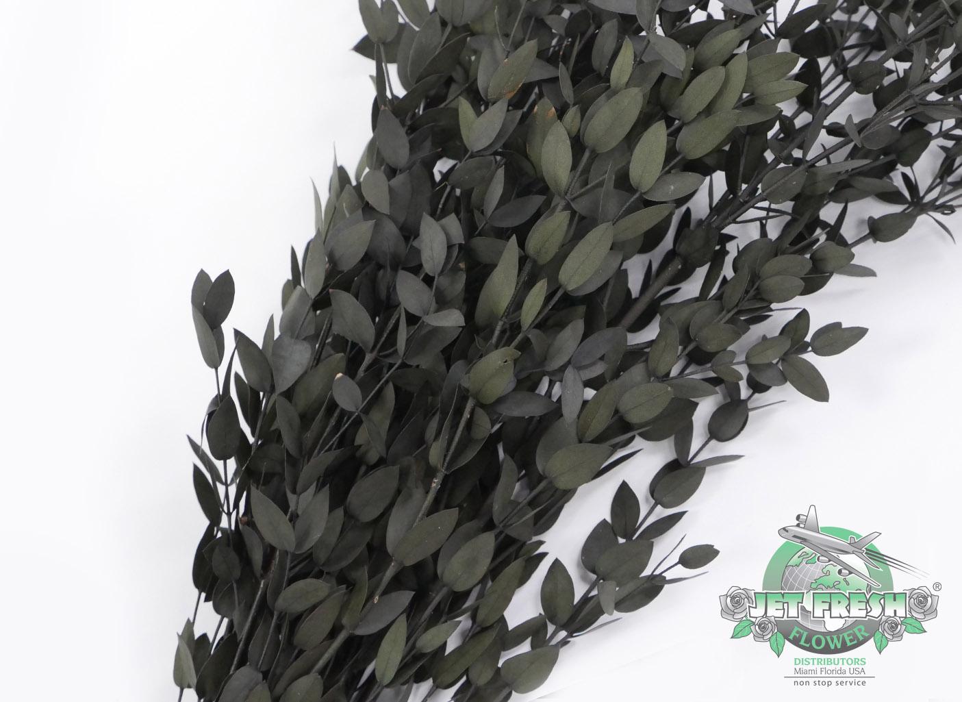 Preserved Parvifolia Eucalyptus