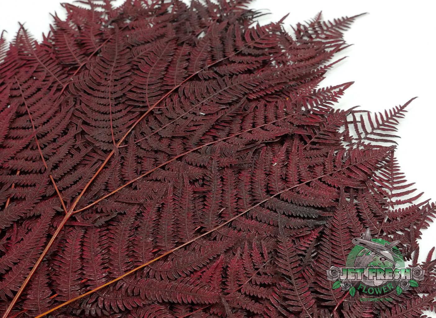Preserved Red Fern