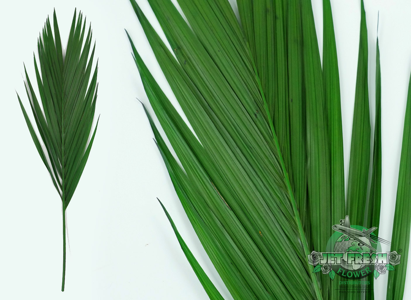 Preserved Palm Leaves