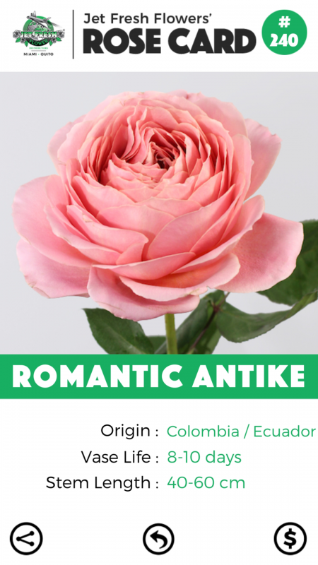 Romantic Antike rose card