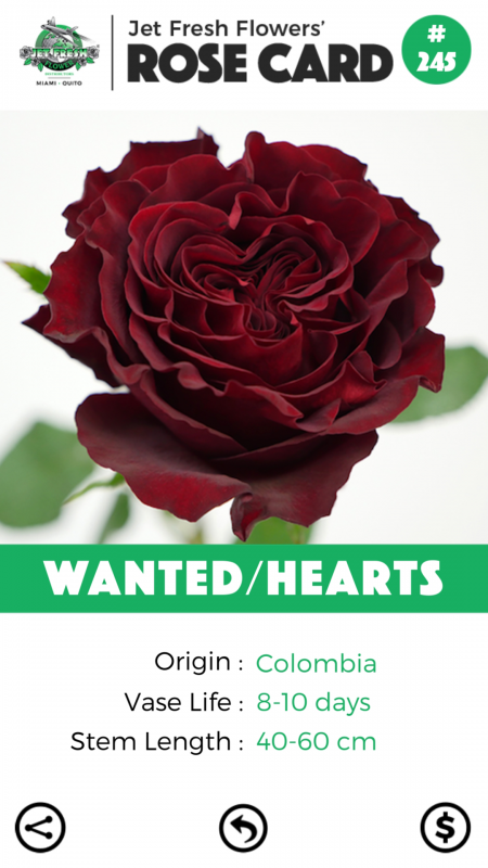 Wanted/Hearts rose card