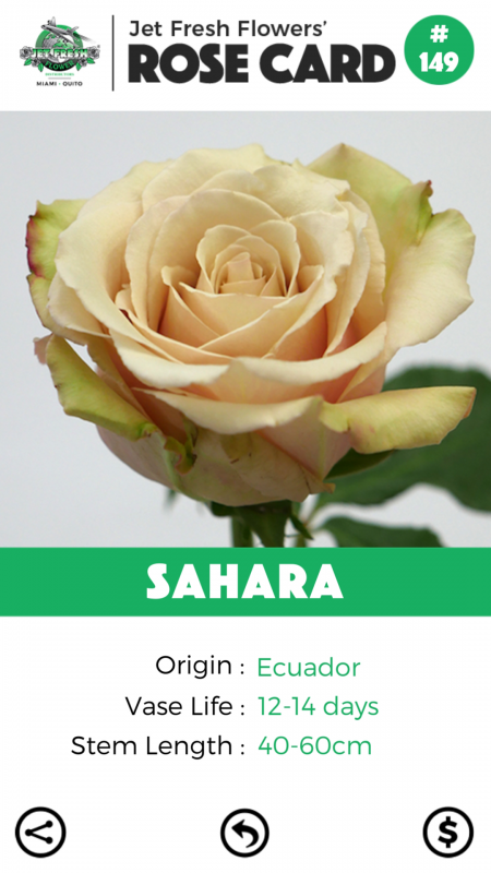 Sahara rose card